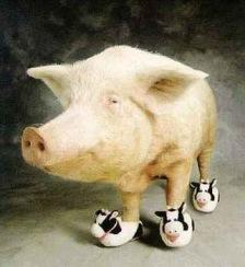 Cerdo-Pachulo yo