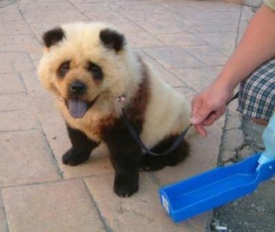 Panda tepiteño