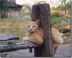 gatito (8)