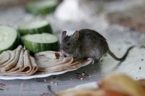 Ratones-en-la-cocina