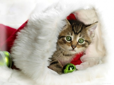 navidad-miu