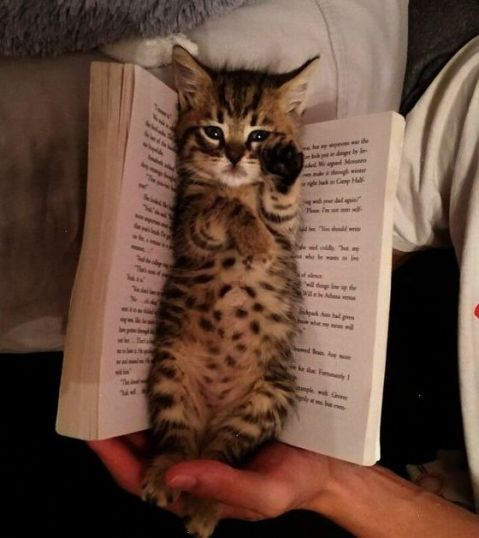 gatito-libros-SPC